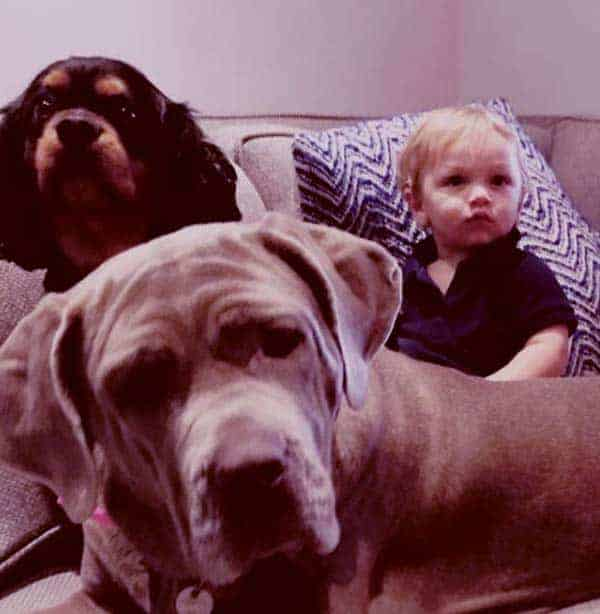 Image of Dave Salmoni first son, Thomas John with his dogs